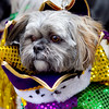 2011 Alton Mardi Gras Pet Parade : Annual Alton Mardi Gras Pet Parade