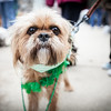 St. Patrick's Pooch Parade : St. Patricks Pooch Parade was held on the streets of downtown Alton to benefit the future Dog Park in Alton.  Mother Nature held off her last blast of winter (hopefully) for the event but the cool temperatures and breezy conditions did not damper the spirits of those who attended.  Notesome of the profits from the prints will benefit Hope Rescues.